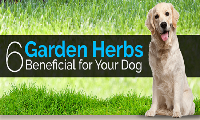 6 Garden Herbs Beneficial for Your Dog - Feature Image