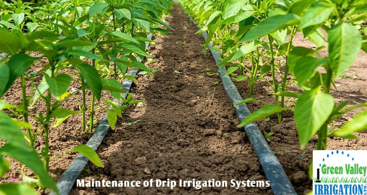 How to Maintain Drip Irrigation Systems