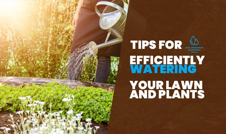 Tips for Efficiently Watering Your Lawn and Plants