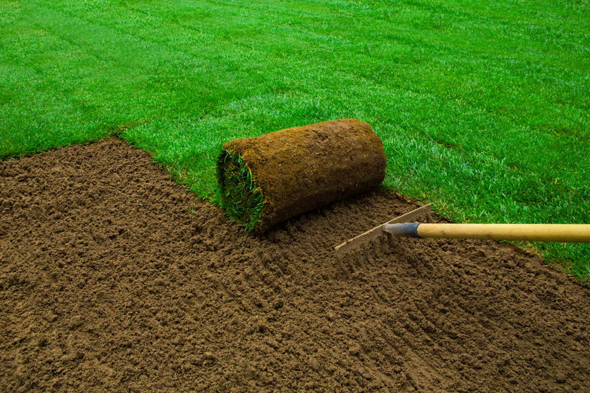 guide-successfully-growing-sod